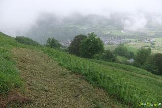 N°27/ La fougeraie du Betat au-dessus  du Village de Lescun : le retour est ouvert.