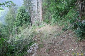 N°22/ Une fois dans le Bois de Chimits, le début du sentier est parfaitement fauché, ras et large : on apprécie ce chemin créé à la fin du XIXè siècle pour planter une forêt de protection contre les avalanches pour le village d'Aydius.