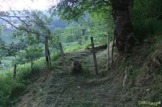 N°21/ En remontant le Chemin de Labayas vers Aydius : la première barrière, fauchage soigné de l'ONF