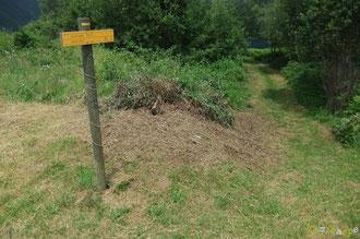 N°42/ Au Col de Rédo fauchage plus large repoussant les limites du roncier : enfin du travail intelligent !