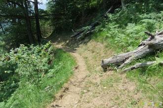 N°20/ Le Chemin des Jaupins est correctement fauché, côté Bedous, faisant apparaître l'insuffisance du travail de dégagement de chablis qui débordent encore sur l'emprise du chemin !