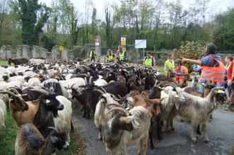 Bêtes et gens rassasiés se préparent à nouveau pour le départ.