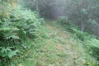 N°36/ Fauchage approximatif sous le Col de Lagréou en allant vers le bois et la Fontaine des corbeaux ! on ne dira rien, les héros (faucheurs) sont fatigués !