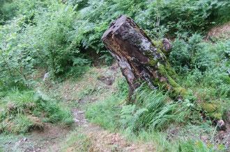N°43/ Fauchage hésitant entre plusieurs tracés : le meilleur contournant le gros tronc par la gauche en descendant a été oublié : aux randonneurs de se débrouiller !