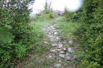 Buis et chemin pavé luisant au-dessus de Siresa