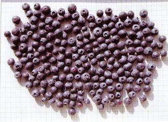 全果数:209果、平均重量:1.48g、最大果実・横径:1.9㎝、     最小果実・横径:1.0㎝、屈折糖度計示度:11.8° 全体的に果柄痕とその周囲に赤みが残っている果実が多かった