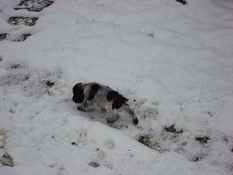 Xanti im schnee