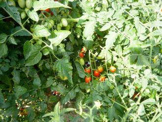 有機栽培のメリット