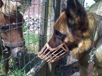 Axelle et son ami le poney