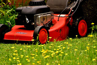 Wilder Streifen im Rasen.