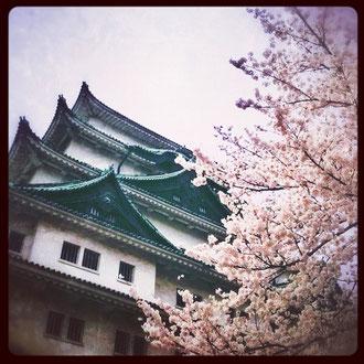 名古屋城プラス桜。
