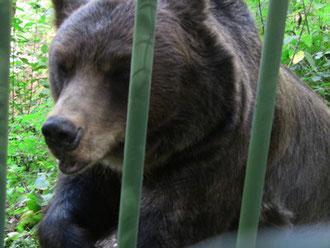 あ、すんません、俺クマですけど。続き読んでもらえます??