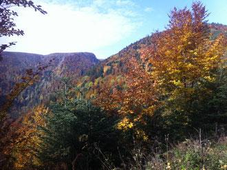 Les Vosges et la fôret en automne