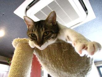 ネコの手貸したろか?