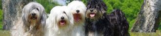 Nyischang-la Tibet Terrier