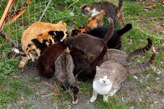 右下のネコが「オレにも食い物くれ!」とひらむ