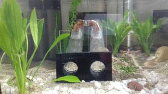 Modell von der 2-Kammern-Organismenwanderhilfe