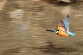 鳥の写真集はコチラヘ