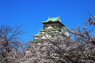 大阪城公園の桜(別ページに移動します)