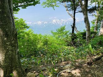 ▲西側の木々の間の展望場所からは大朝日岳と周辺の山々がばっちり拝める