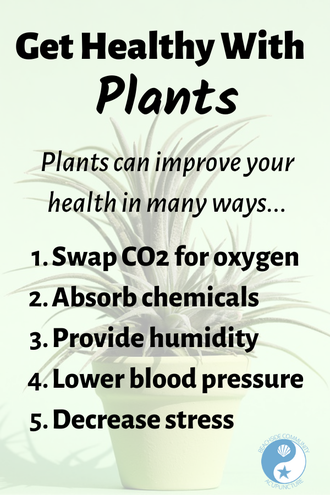 """Get Healthy With Plants"" on the Beachside blog, potted plant"