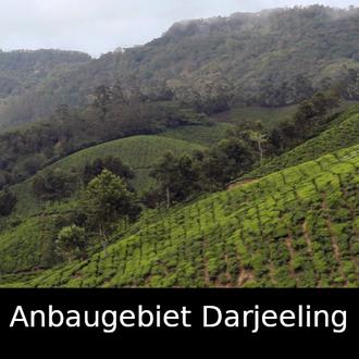 Anbaugebiet Darjeeling