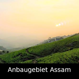 Anbaugebiet Assam
