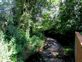 Willows and other species along the River Cole at Tanners Green Lane