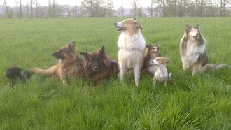 Unsere heutige Sechser-Bande: von links nach rechts: Corona, Lilli Metchley, Chestnut, Honey Bee, Queen