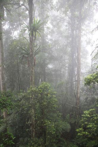 Parc National de Dorrigo