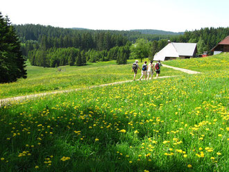 """Die """"Stockenten"""" (Nordic walker mit Stöcken) überholten uns."""