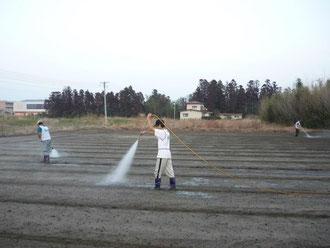 耕して作付け直前の畑への散布作業