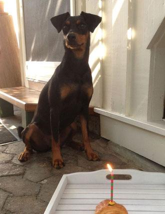 Frieda an ihrem 1. Geburtstag ;-)