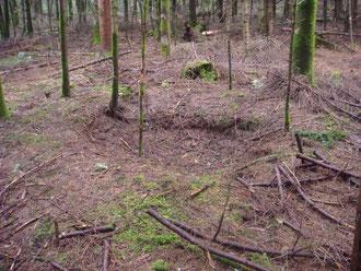Foxholes still visible