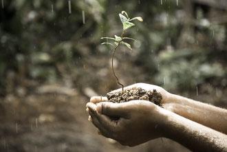 Beide Hände halten Erde, in der eine neue Pflanze wächst