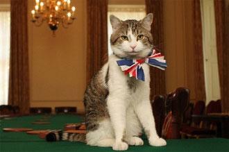 イギリス首相官邸公務員ネズミ捕獲長 「ラリーくん」(上の写真)・元野良猫 ロイヤルウエディングに出席時官邸公式ホームページより