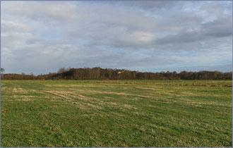 Gaushorner Moor