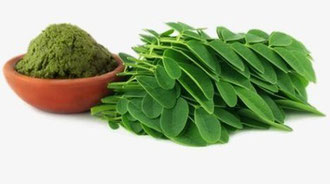 Foto: Moringa Oleifera Pulver und Moringa Blätter