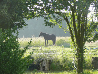 'environnement nature et randonnée gîte rural Saint Quentin Aisne Laon Noyon Compiegne Peronne