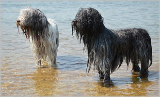 Ferien mit Hund an der Nordsee