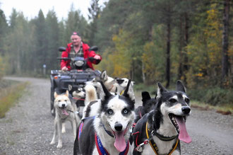 Husky Tour in Lappland