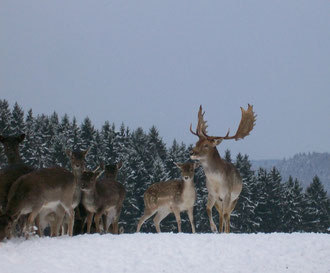 Winterbilder Dezember 2010