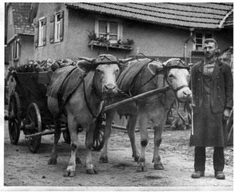 Rübentransport in den 1950er Jahren
