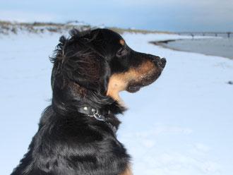 Leon blickt auf Ostsee