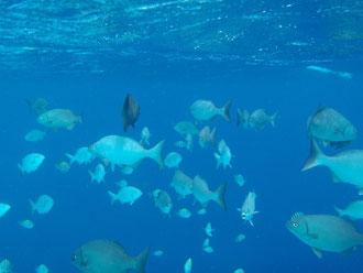 Bonaire onder water