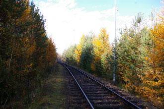Herbst am Zufahrtsgleis zur ehemals geplanten WAA Wackersdorf