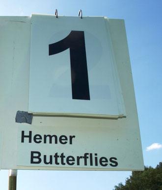 """""""Hemer Butterflies"""" feiern ersten Geburtstag."""