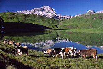 Sommer auf der Alpe (Fotograf Andreas Künk)