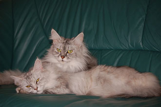 Tobi und Kimba im Jan.07