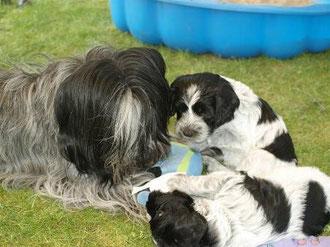 Frieda und ihre Babys
